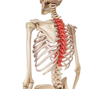 Thoracic Spine Mobility  & Its impact on the Shoulder